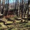 Il 17 maggio apertura del Parco Avventura di Forge nel cuore dell'Aspromonte