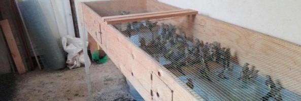 Villa San Giovanni: sequestrati 570 uccelli specie protette