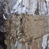 Carta e cartone, in Calabria la raccolta cresce del 17%