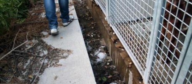 NEL REGGINO: LA 'NDRANGHETA  NELLA GESTIONI DEI CANILI, ARRESTI