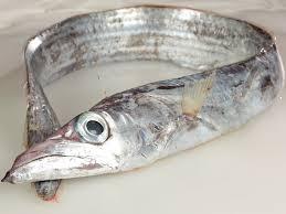 spatola pesce