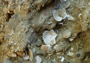 Grotta pertuso d'oro_3